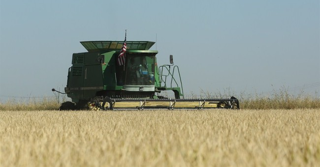 California drought takes bite out of rice harvest