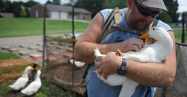 Ohio veteran found guilty, fined over pet ducks