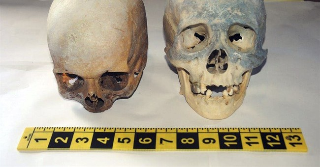 2 adult human skulls found in trash in Connecticut