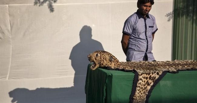 India destroys stockpile of illegal wildlife parts