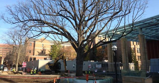 Old tree moving to new University of Michigan spot