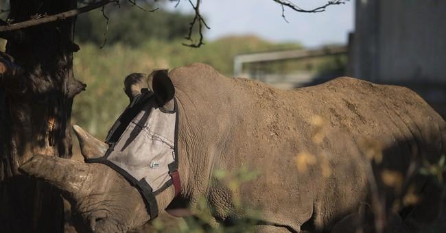 AP PHOTOS: Israeli mask saves hurt rhino's vision