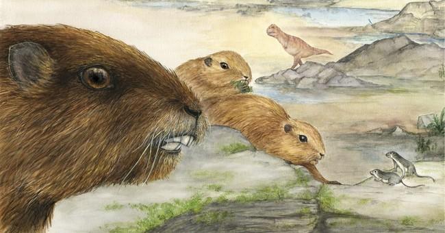 Weird skull from Madagascar reveals ancient mammal