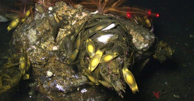 Scientists find new coral species off California