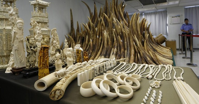 Report: Africa ivory smuggled on China state visit