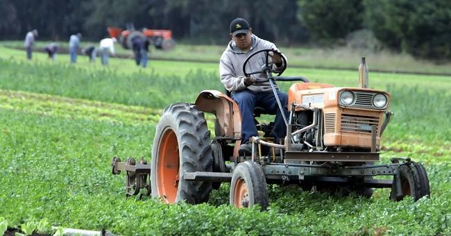Showdown looms as California eyes pesticides