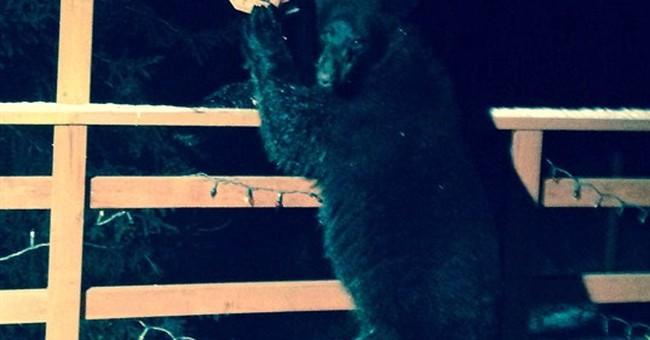 Mild temps mean Alaska bears still hanging around
