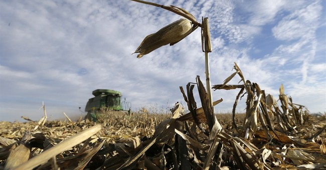 Snow could reduce corn harvest in Upper Midwest