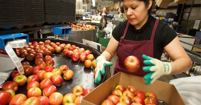 Port problems endanger apple exports