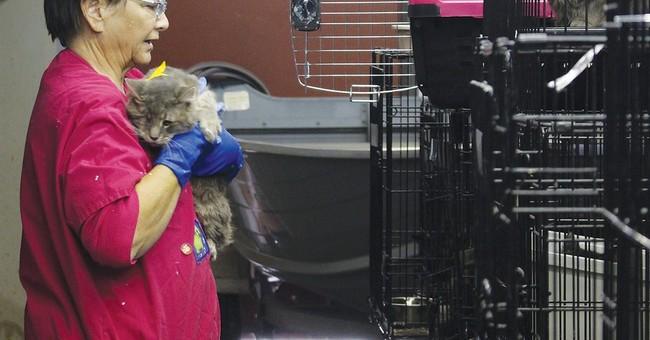 68 cats found in van in Oregon hoarding case