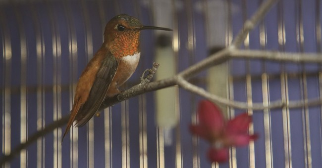 Minnesota woman rescues hummingbird from cold