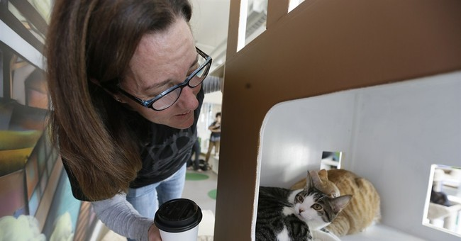 California cat cafe is catnip for feline fans