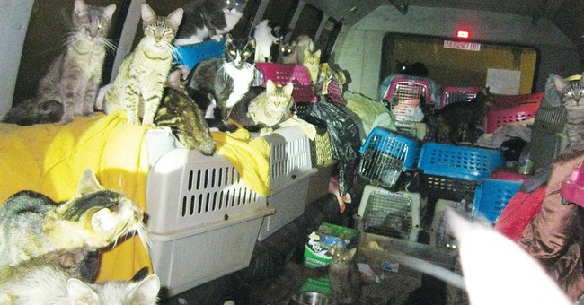 68 cats found in van in Oregon hoarding case