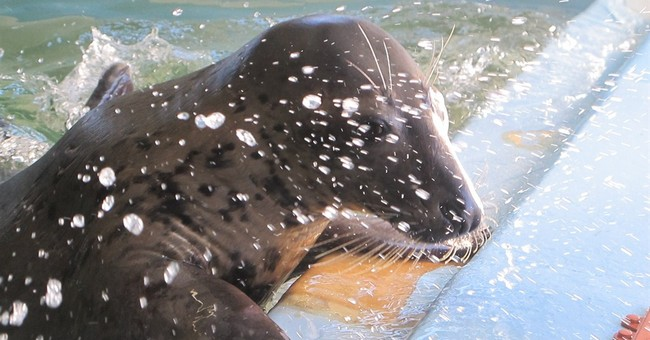 New Jersey's land-lovin' seal bound for Detroit