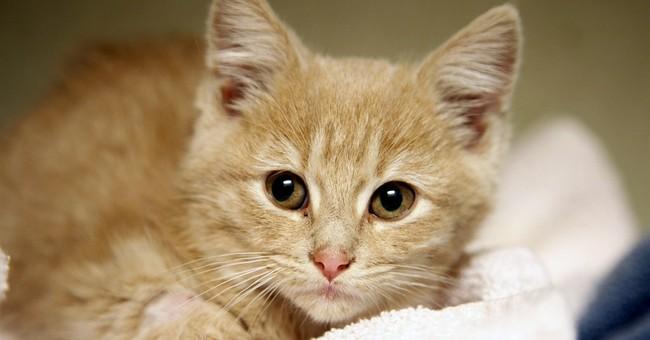 Kitten found freezing in Denver now perky, purring