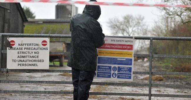 UK bird flu strain same as the Dutch one