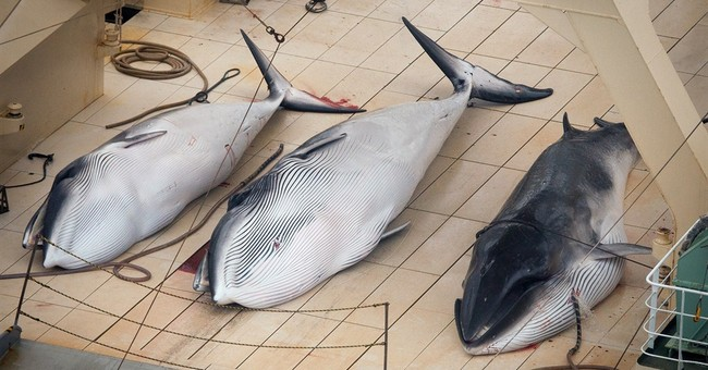 Japan cuts whaling target in bid to resume hunt