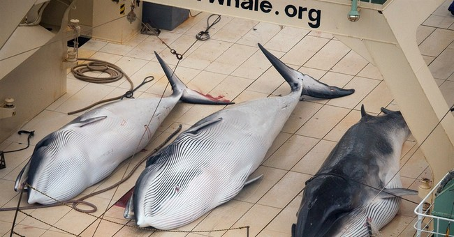 Japan cuts whaling target in bid to resume hunt