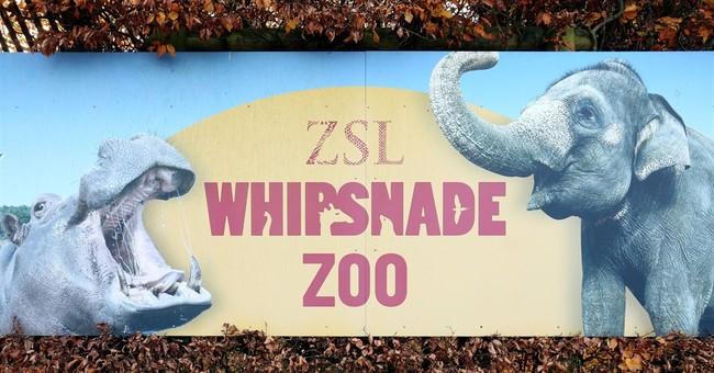 Keeper at British zoo seriously injured by rhino