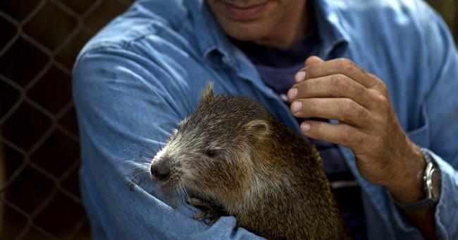 Cuban couple keeps rodents called hutias as pets