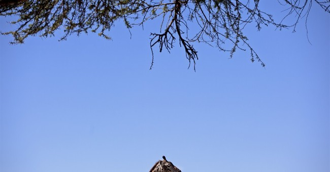 Giraffes on a plane? Most Wanted list released