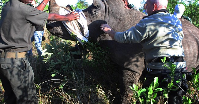 South Africa seeks to move rhinos from harm's way