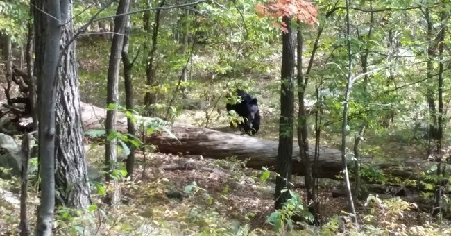 Hiker photographed bear before it killed him