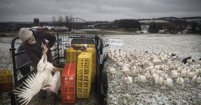 AP PHOTOS: Turkey farmers connect with NYC buyers