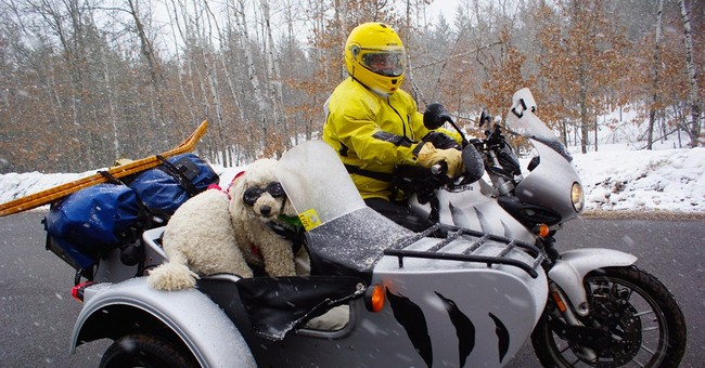 Slobbery sidekicks: Dogs ride in bikers' sidecars