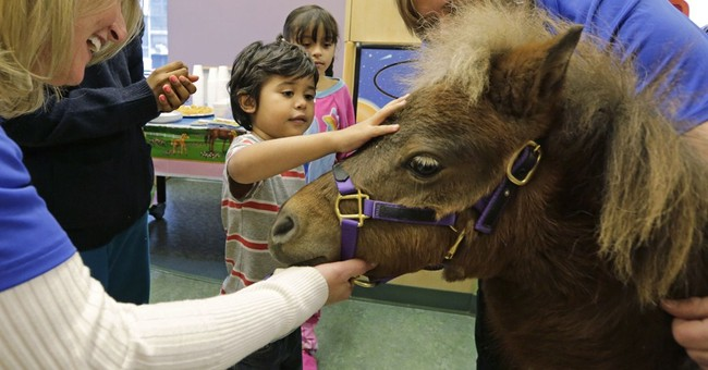 Horse trots into hospital: It's therapy, no joke
