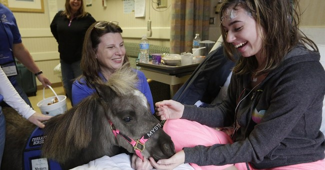 Horse trots into hospital: It's therapy, no joke