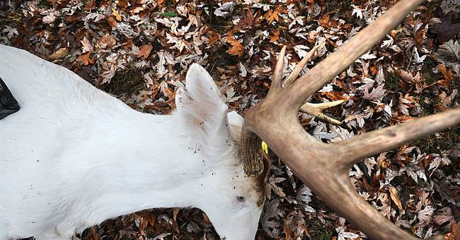 Missouri hunter feels heat for killing albino deer