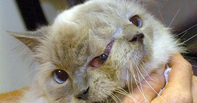Record-setting cat with 2 faces dies at 15