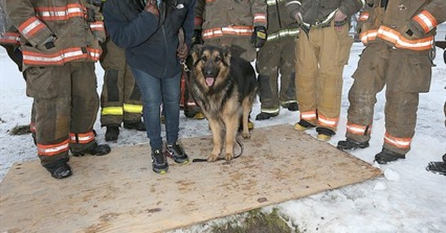 Firefighters save dog from sinkhole in Buffalo, NY