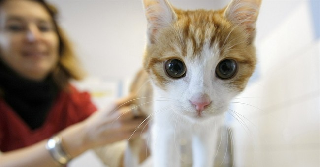 Frenchman charged with abusing a kitten