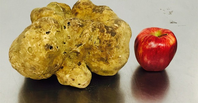 Record 4.16-pound truffle sells for $61,250 in NYC