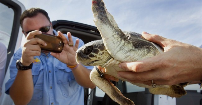 Texas biologists warm chilled sea turtles