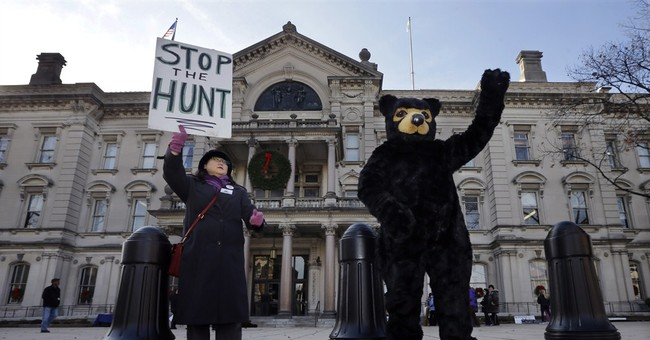 Fatal attack puts focus on New Jersey bear hunt