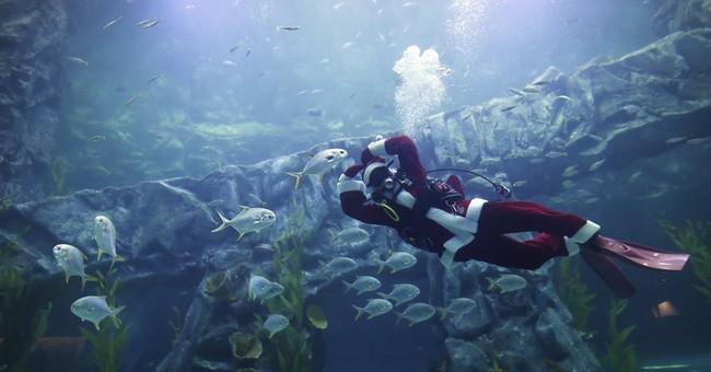 Image of Asia: Santa dives at Seoul aquarium