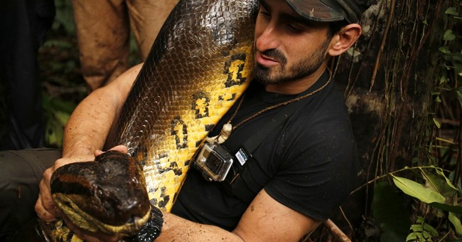 'Eaten Alive' watched by 4.1 million viewers