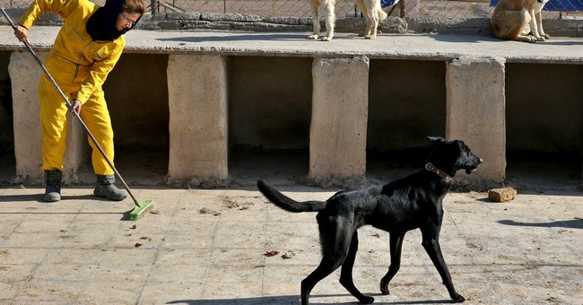 Iran's unwelcome dogs find care at rare shelter