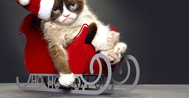 Cat books: Purrfect holiday gifts for feline fans