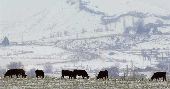 As beef prices rise, cattle herds go missing in Idaho
