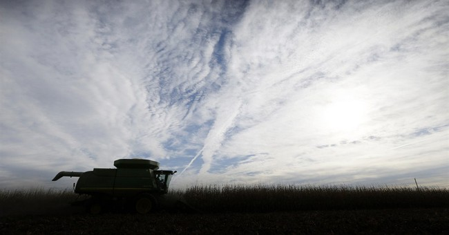 USDA sees higher corn, soybean demand in report