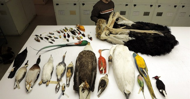 New family tree for birds spurs ideas on evolution