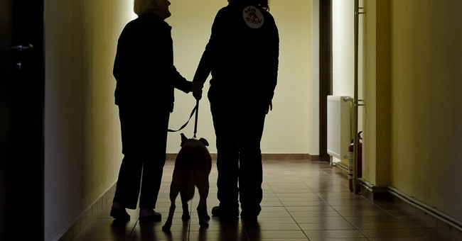 Street dogs transform lives of Bucharest elderly