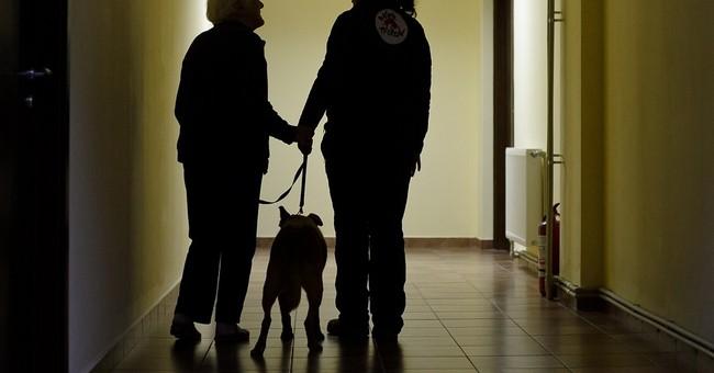 Street dogs transform lives of Bucharest elderly