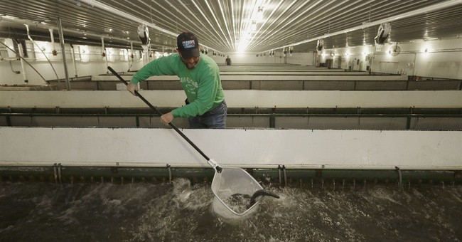 Fish farming finds its way to land-locked Midwest