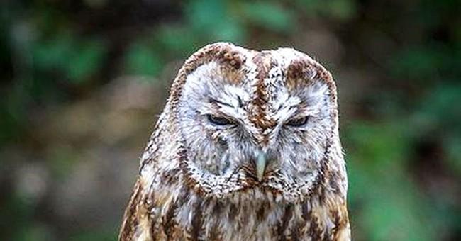 Rare owl stolen from Washington bird sanctuary