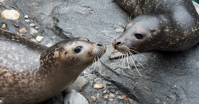 Central Park cuteness: Manhattan zoo exhibits 2 harbor seals